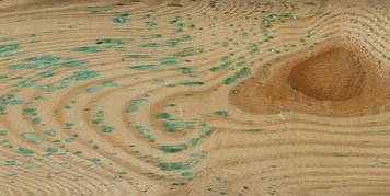 groen zout in het hout